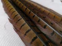 Cock Pheasant Centre Tails
